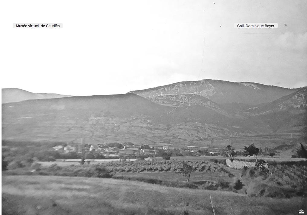 Vignes à Caudiès 1909