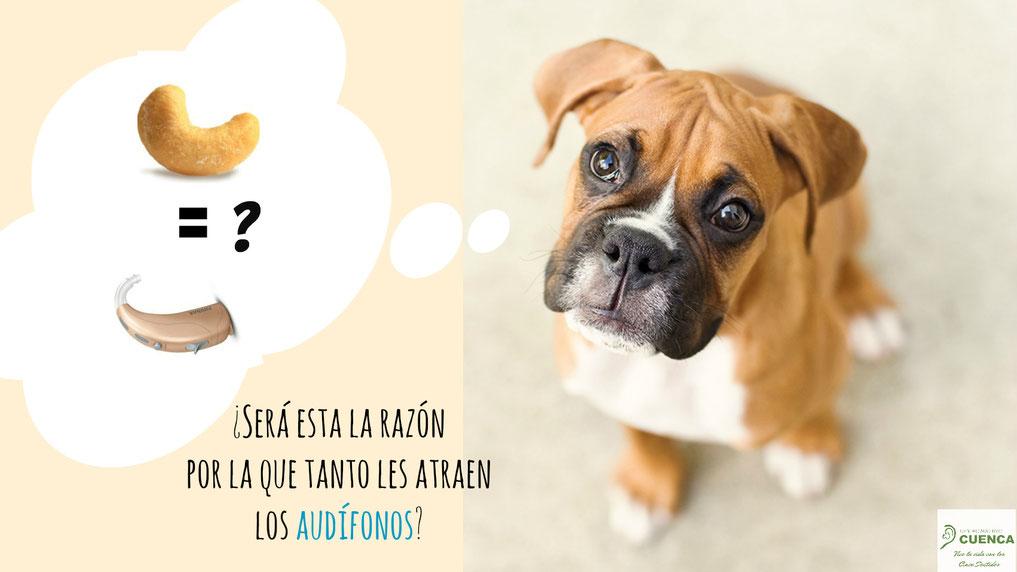 A las mascotas les llaman poderosamente la atención los audífonos. No los dejes a su alcance.