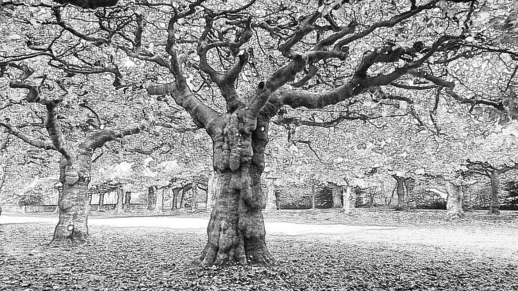 So wie dieser Baum wird sich mein Blog immer weiter verästeln und zu einem weit verzweigten Tourengebilde verbinden