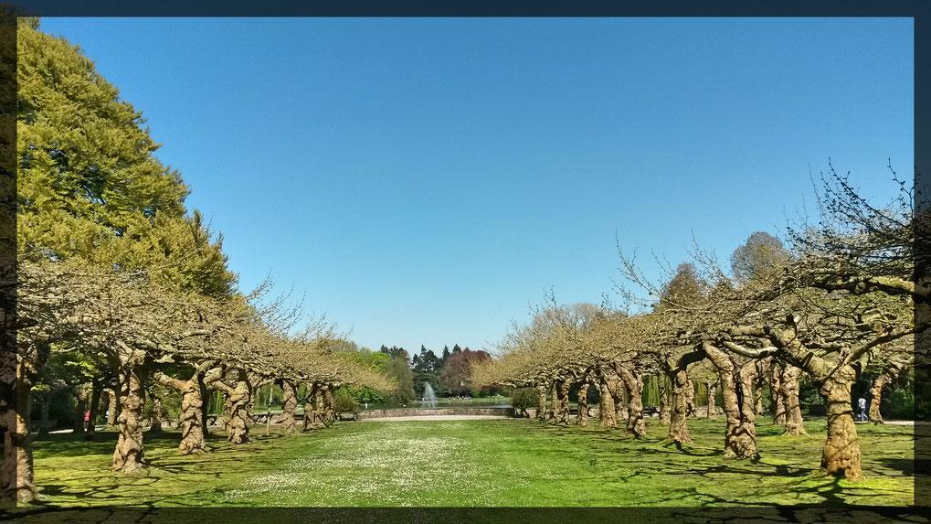 Botanischer Garten und Schönwasserpark im Frühlingserwachen