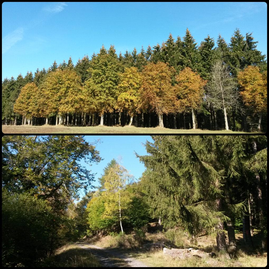 Goldener Oktober im Manscheider Tal
