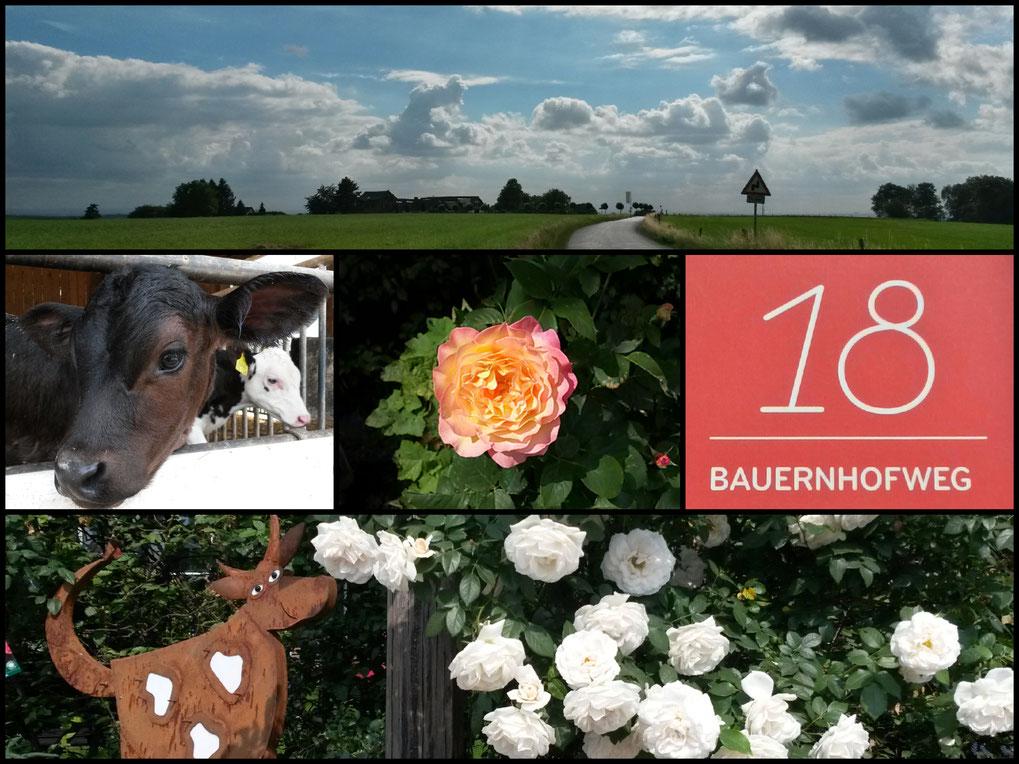 Collage Bauernhofweg