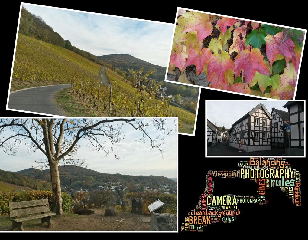 Durch die Weinberge bei Oberdollendorf im Siebengebirge