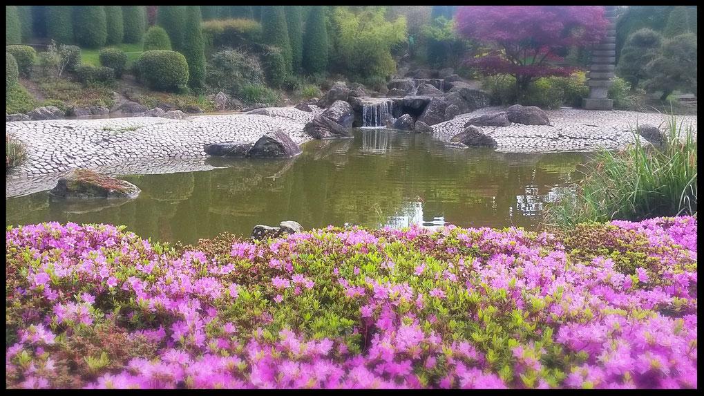 Idylle im Japanischen Garten Bonn im Rheinpark