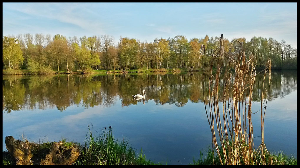 Der Frühling spiegelt sich im Borner See