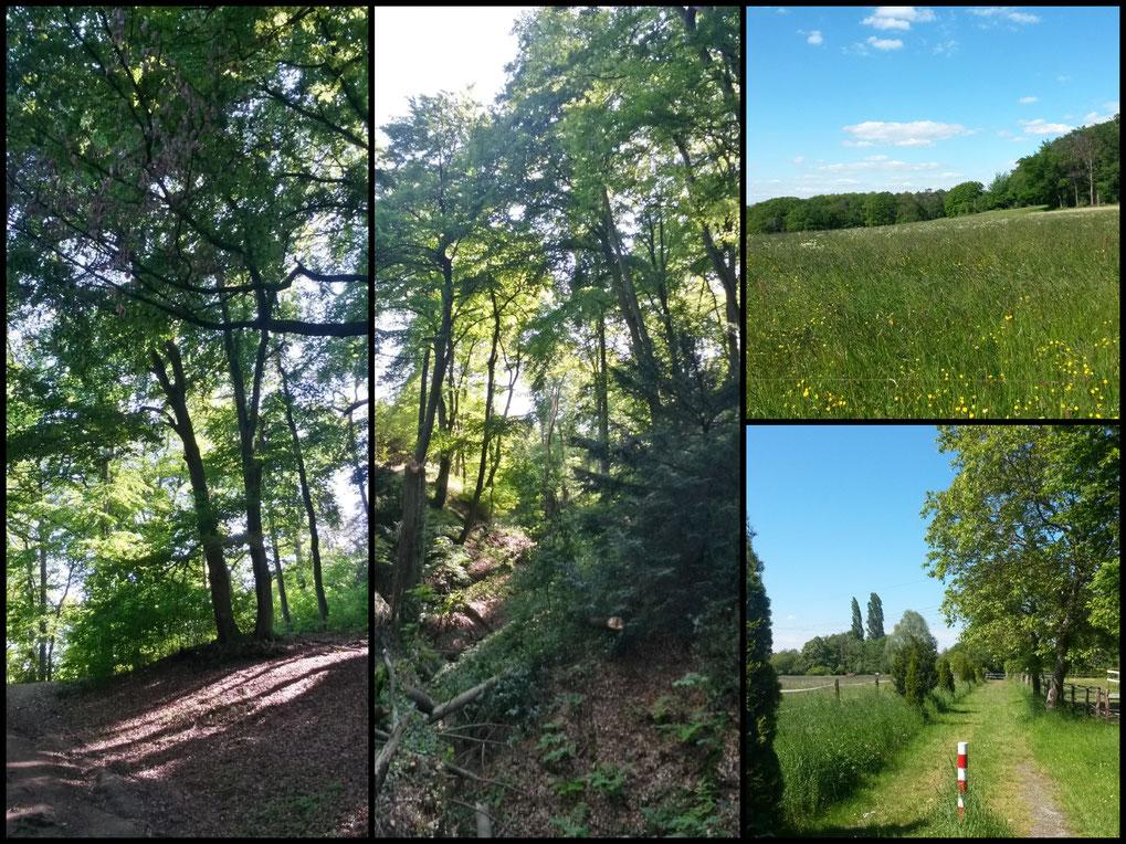 Sonne und Schatten:  Lichtspiele im Buchenwald