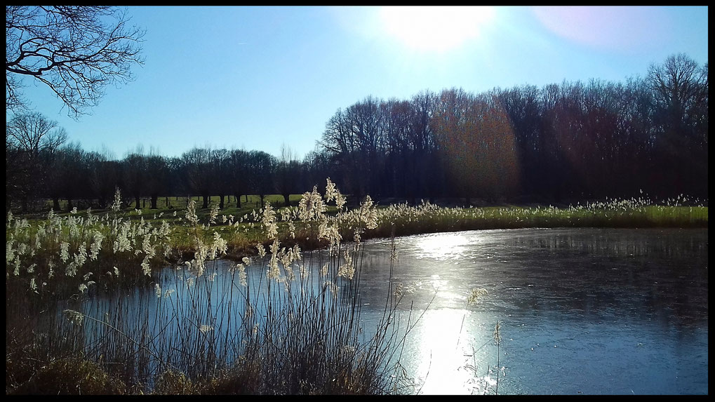 Noch ist Eis auf der Wasserfläche, bald beginnt hier das große Quaken der Frösche und das Bild verändert sich