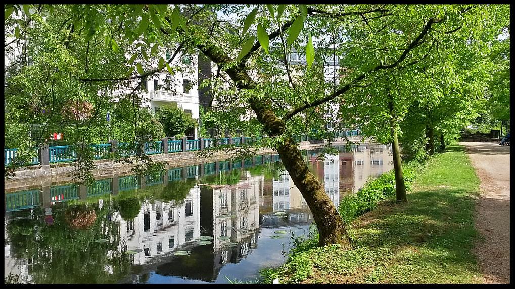 Stadtspiegel aus dem Botanischen Garten heraus
