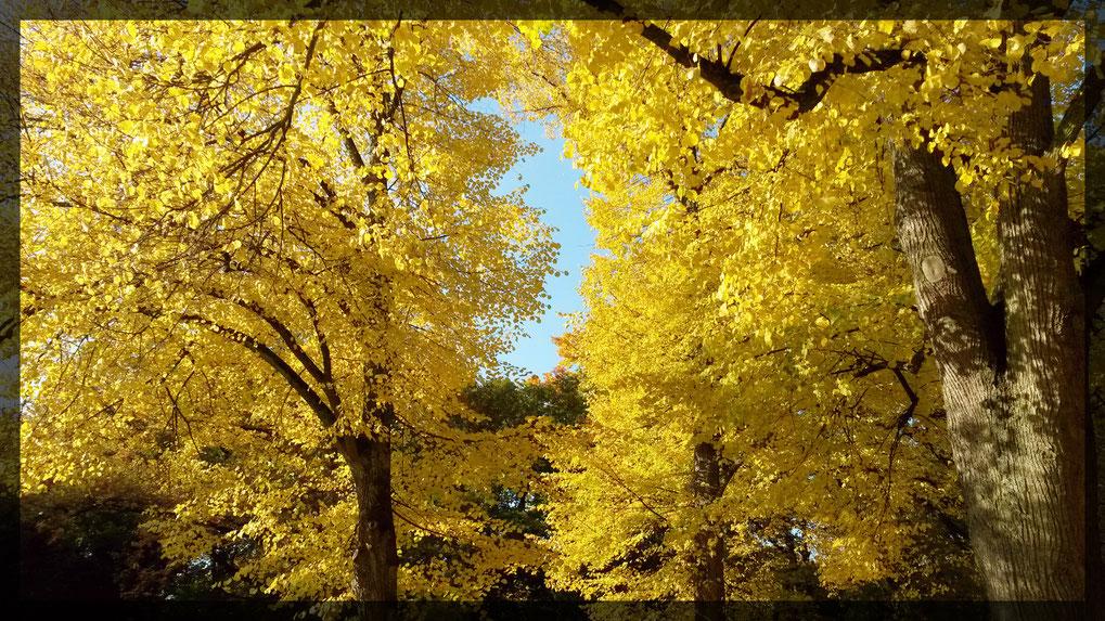 Herbstfarben im Benrather Schloßpark