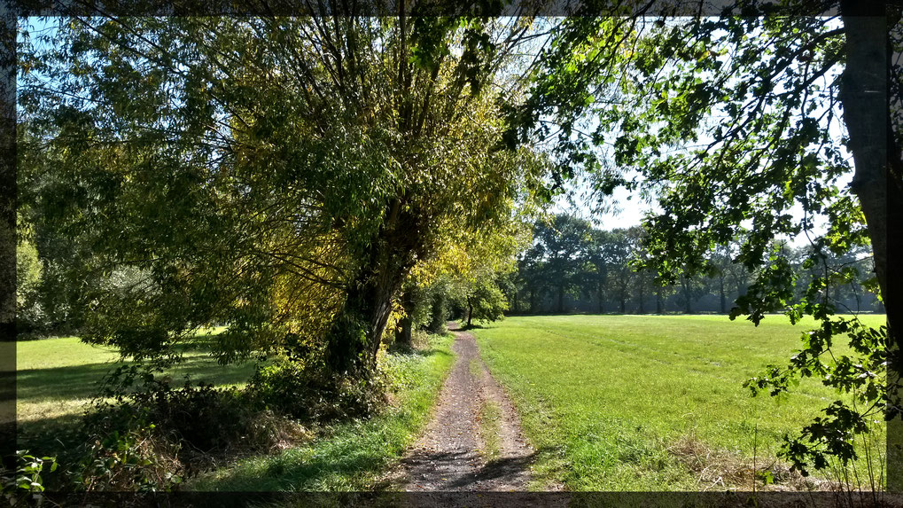 Typische Niederrhein Landschaft im Hülser Bruch