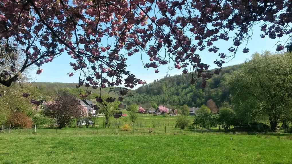 Blütenblicke in die Wupperauen bei Rüden