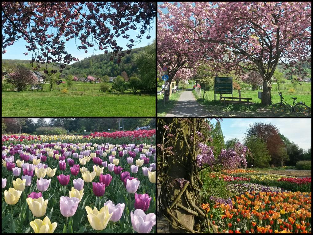 Botanischer Garten Solingen und Wupperauen - eine grüne Radtour!