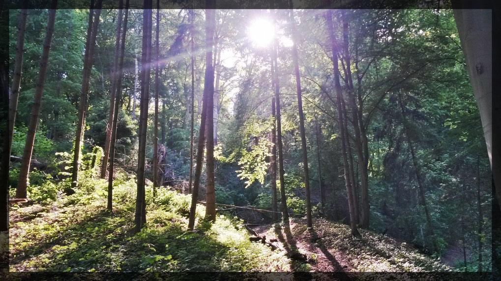 Buchen und Urwald im Naturschutzgebiet