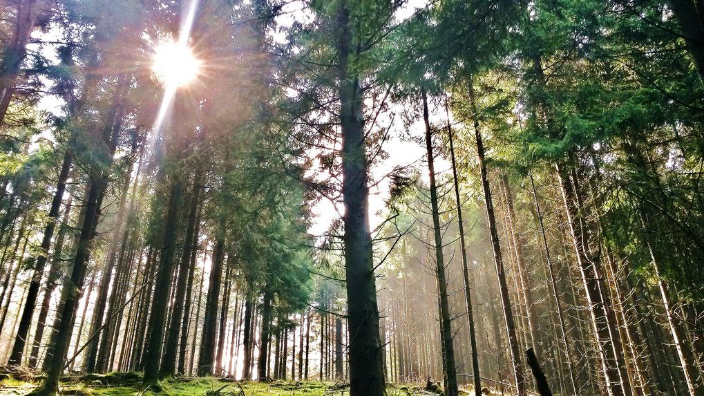Lichtstimmung wie im Märchenwald beim Aufstieg über den Diemelsteig zum Dommelturm