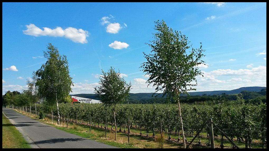Zufahrtsstrasse zur Obstplantage
