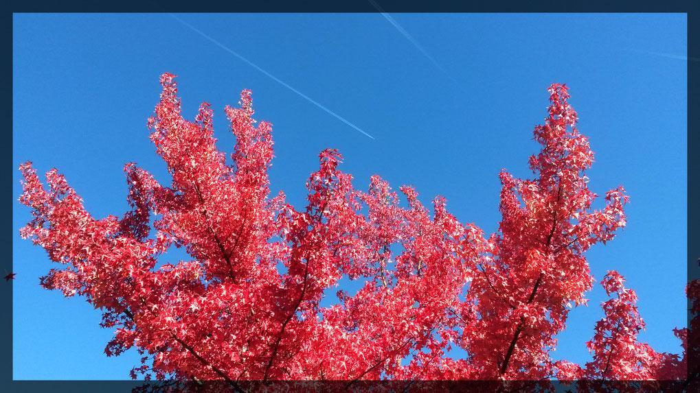 Herbstfarben in der Urdenbacher Kämpe