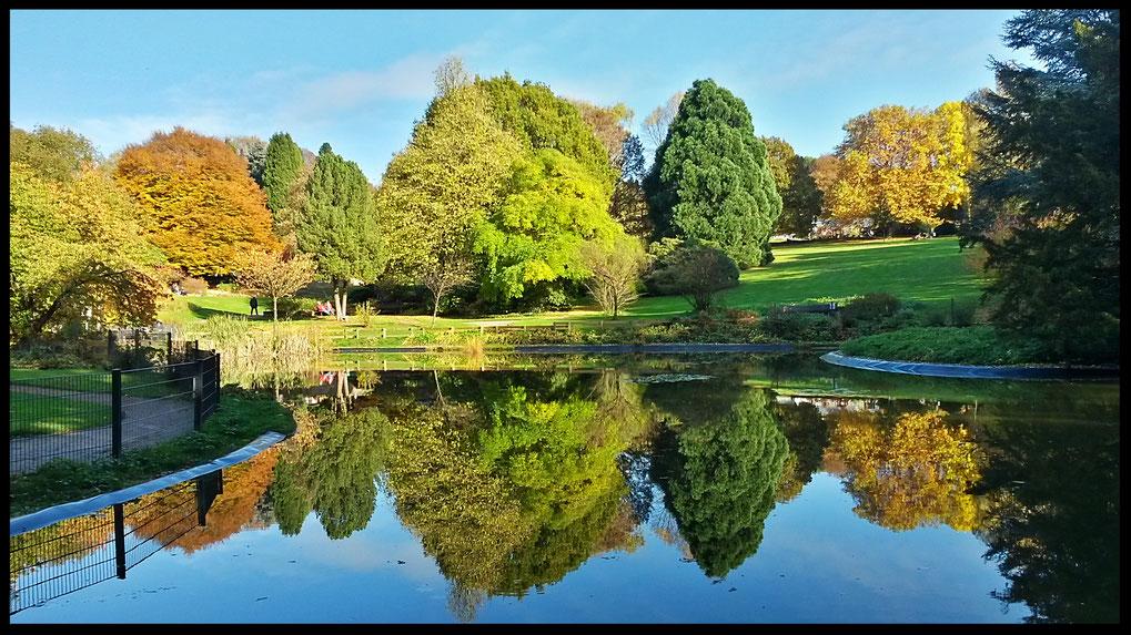 Der Herbst ist gekommen, hier im Botanische Garten in Solingen mit phantastischen Spiegelungen