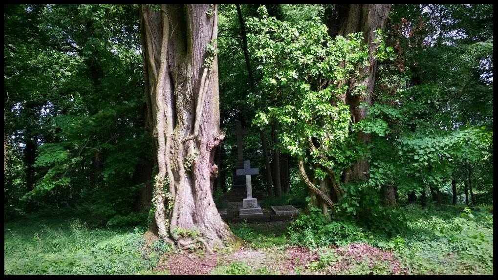 Kurfürstliche Ruhestätte auf Jahrhunderte altem Privatfriedhof der Kurfürsten zu Neuwied
