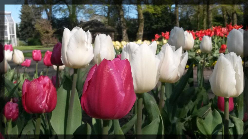 Frühling im Botanischen Garten Krefeld