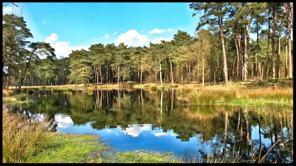 Eine verträumte Landschaft in der Ravensheide, einmalig in ihrer Ausprägung in NRW