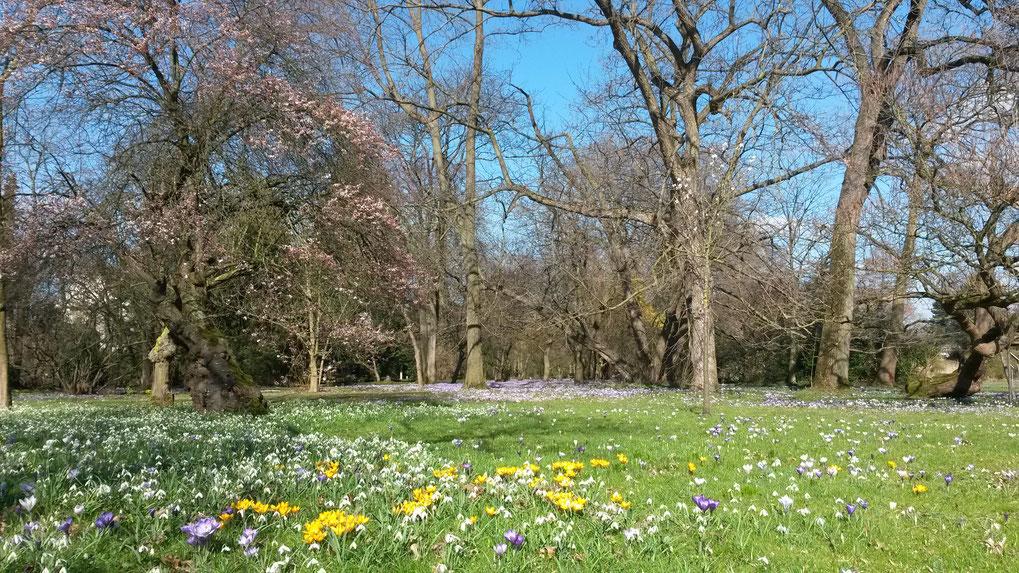 Erstes zartes Frühlingserwachen im Botanischen Garten Köln