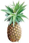 Pineapple Juice  ¥350+10%