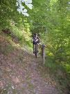 Single Trail im Bernkasteler Wald