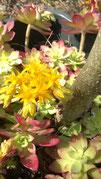 Des fleurs à Capmal