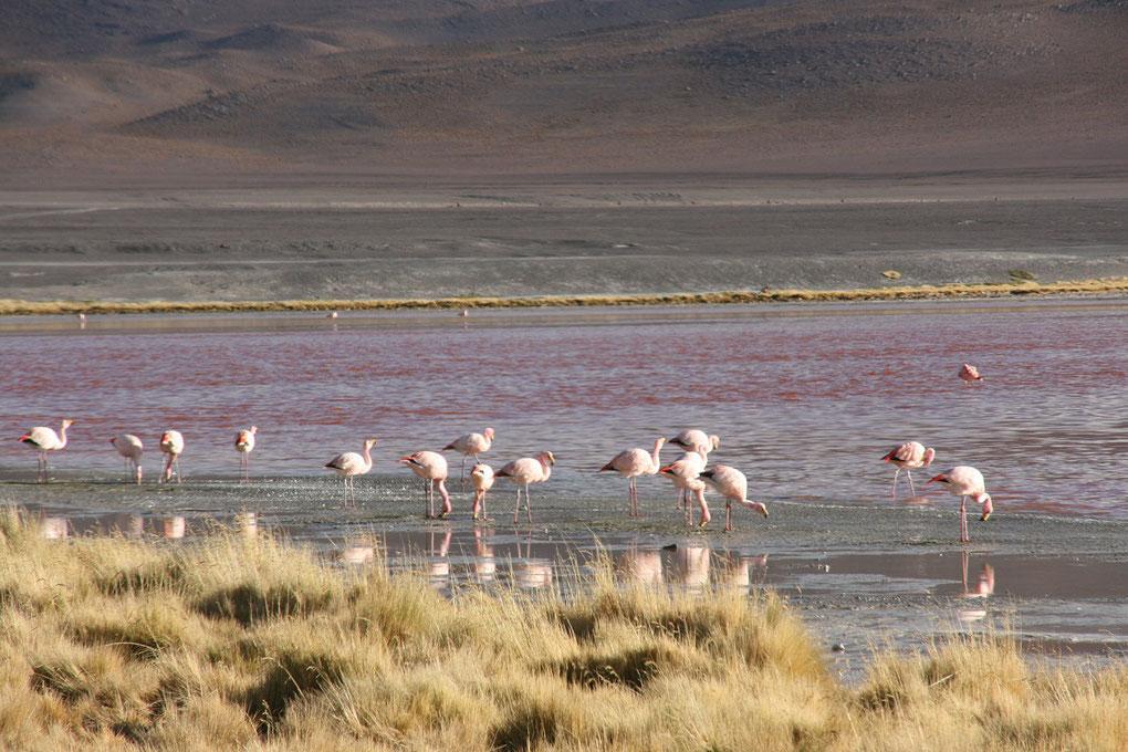 Gruppenreisen Bolivien