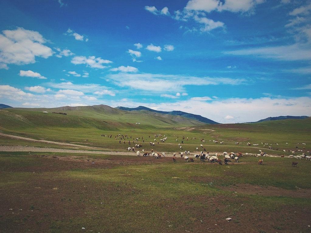 bigousteppes mongolie steppes