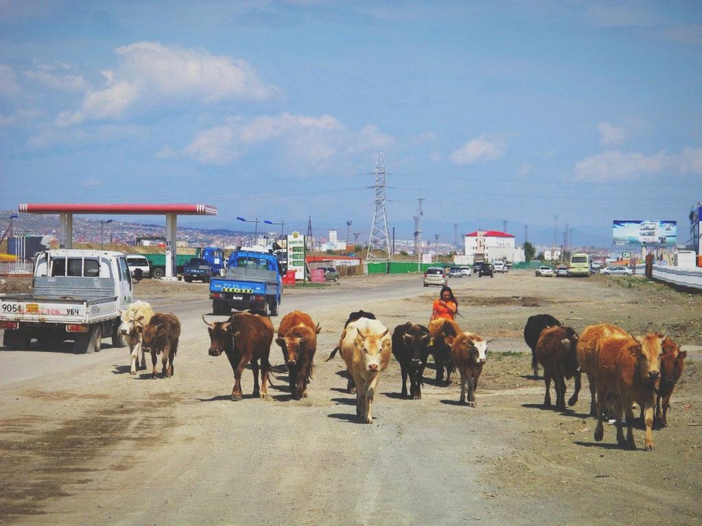 bigousteppes mongolie oulanbator