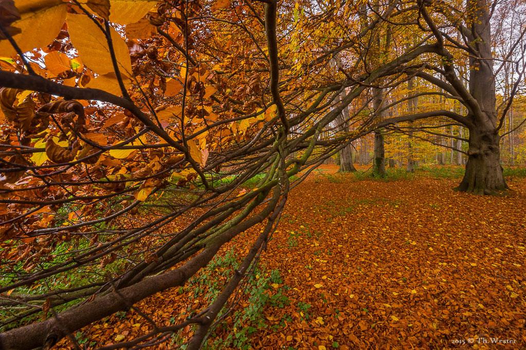 Auch die Wälder mitten in Köln zeigen im Herbst sehr schöne Landschaften (B412)