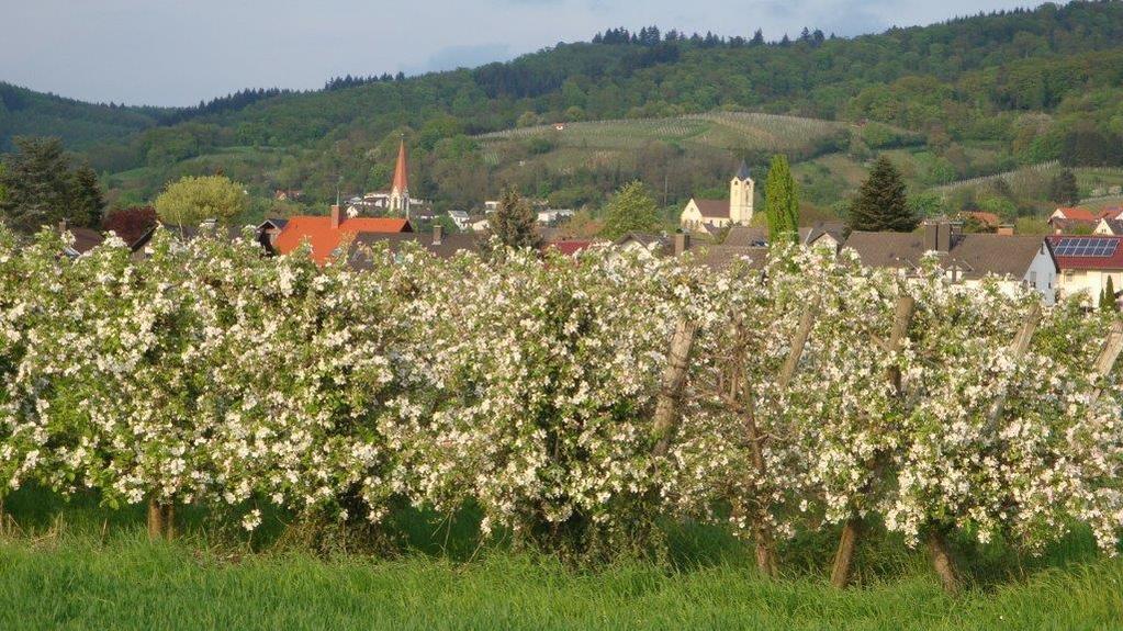 Leutershausen im Frühling... Nicht nur die Obstbäume blühen bei uns an der Bergstraße