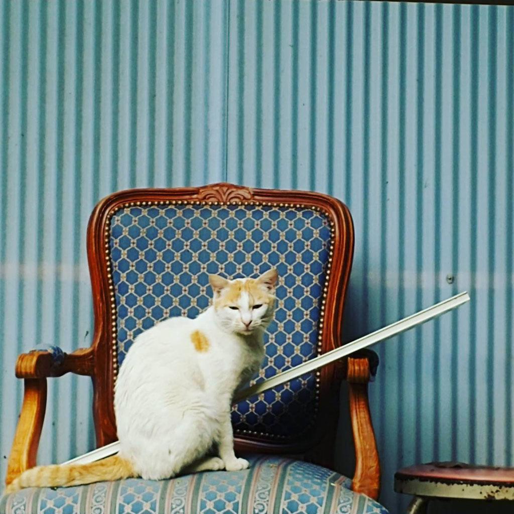 素敵な和尚さんの椅子で、モデル座り