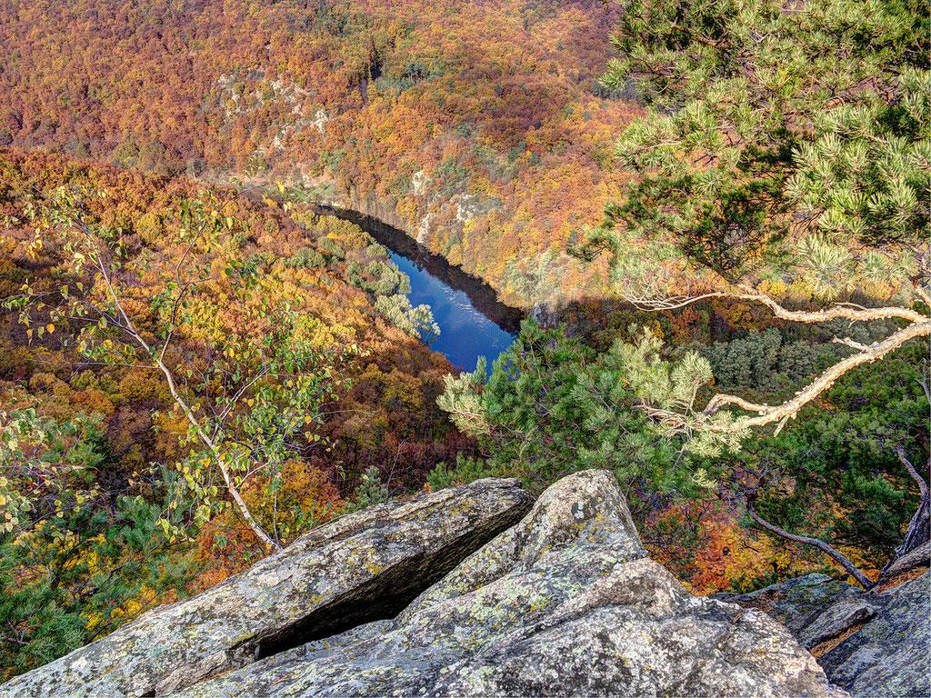 Im Herbst ist die Wald- und Flusswildnis des Thayatal Nationalparks besonders sehenswert; Foto: NP Thayatal