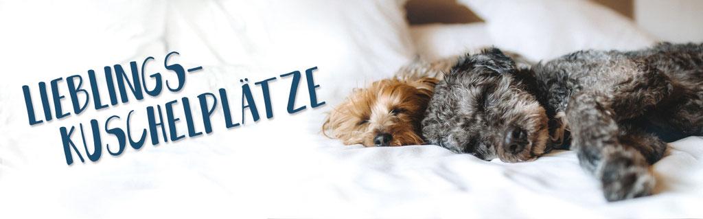Hundestrand Schlafen Kuscheln Hundebetten Hundebett Hundekissen