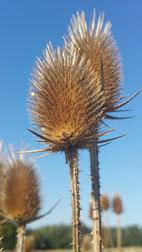 Midlife Krise, Herbst des Lebens, verdorrte Pflanze