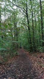 Importance de la forêt sur le climat, ici en Ile de France.
