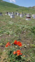 Bienenstöcke in den armenischen Bergen