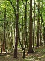 Blick in den grünen Wald