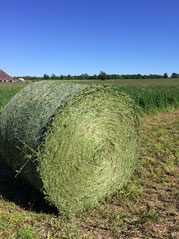 One of the thousands of round bales of dry hay that make up our annual feeding program. As crucial as hay is, it's not the most important thing behind our year-round supply of tender, dry-aged grass fed beef.