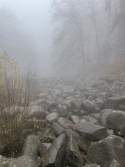 Trekking im Pfälzerwald