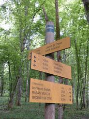 vener marcher en forêt sur les sentiers balisés, découvrir les circuits découverte, circuit de l'écureuil, circuit des lavoirs, sentier du fer, chemin de la mémoire