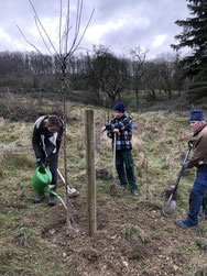 Insgesamt wurden 10 neue Obstbäume gepflanzt. - Foto: Dr. Nick Büscher