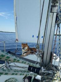 Auf dem Bug des Schiffes im kühlen Wind