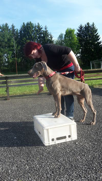 Einzeltraining Hundesschule Rottal-Inn