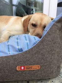 Lüti - Hundebett  - Swissness - Edeleweiss