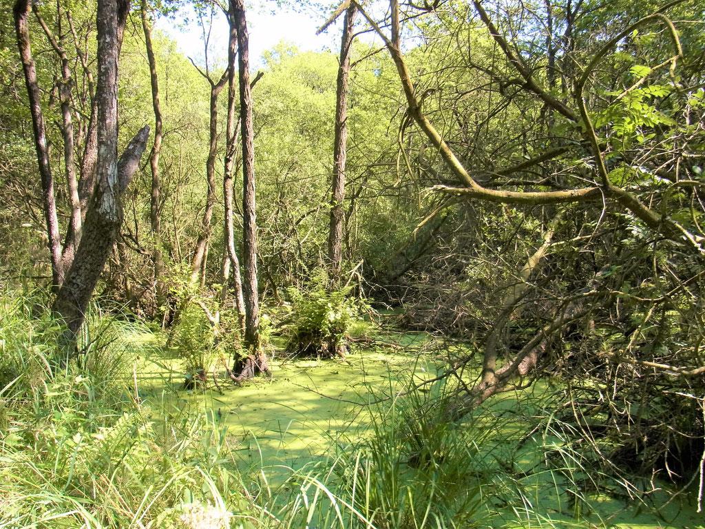 Urlaub in der Natur Darßer Urwald Nationalpark