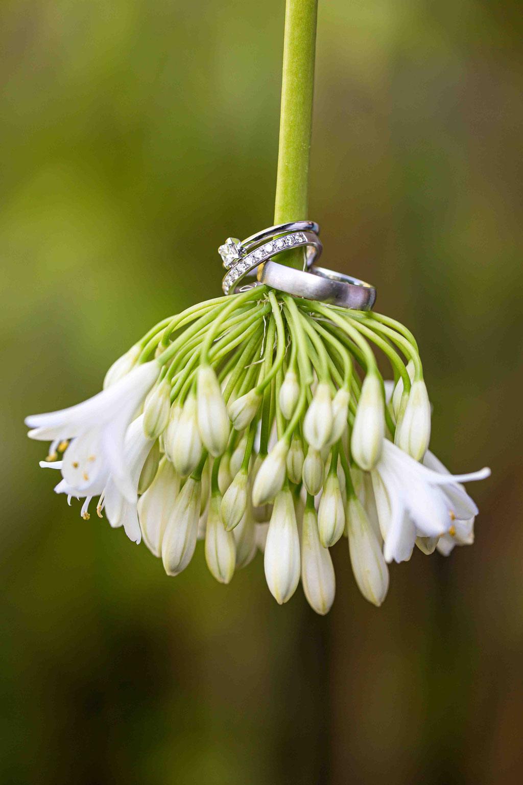 Bilder von Eheringen, künstlerische Ideen für Ehering, Aufnahmen der Hochzeit vom Hochzeitsfotograf