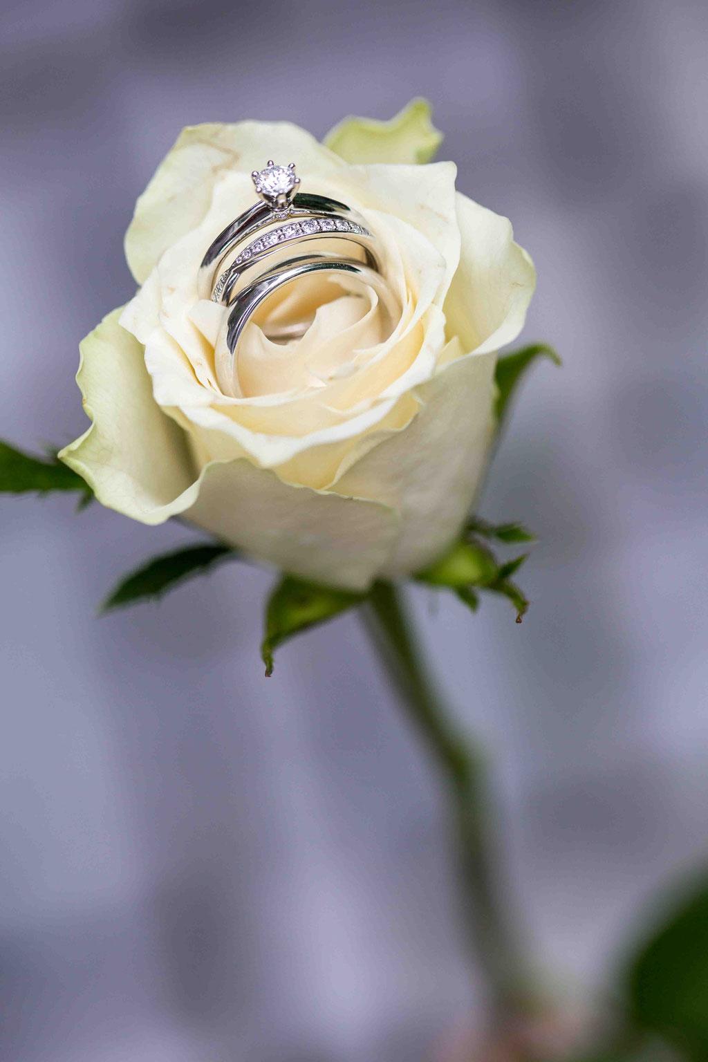 Hochzeitsfotograf, Steffens Herrenmühle - Herrenmühle 4, 3755 Alzenau, Hochzeitsreportage, Hochzeitsfotos, Eheringe in einer Blume, Makroaufnahmen der Eheringe